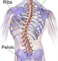 back diagram [ 750 x 1500 Pixel ]