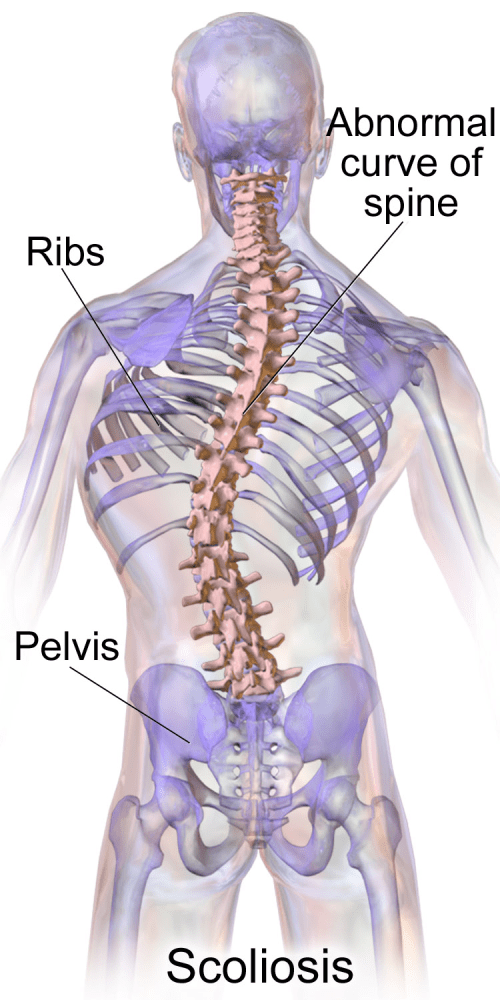 small resolution of diagram of back