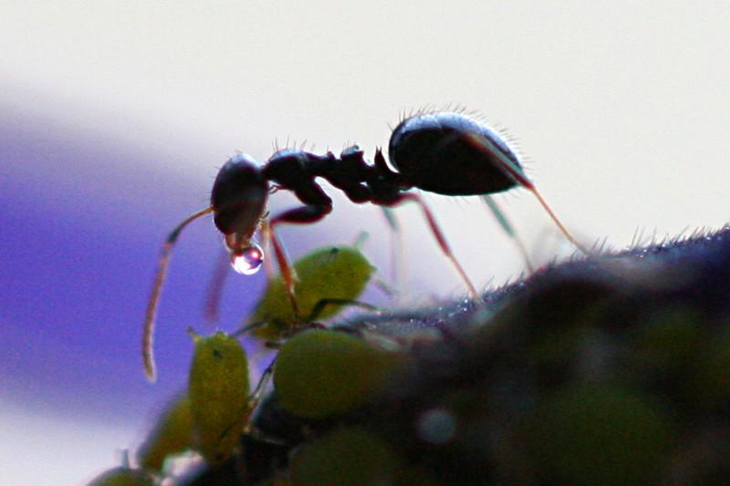 10 Fakta Menakjubkan Mengenai Semut yang Belum Anda Ketahui