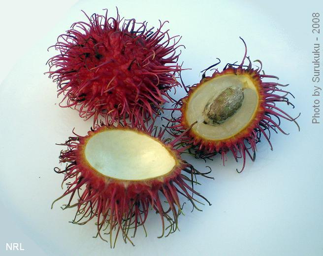 https://i0.wp.com/upload.wikimedia.org/wikipedia/commons/a/a8/Exotic_Fruits_-_Rambutans011.JPG
