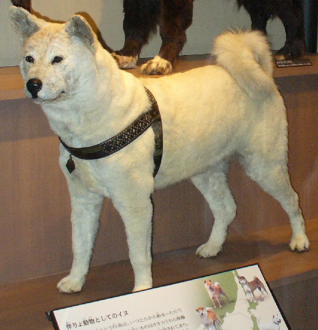 https://i0.wp.com/upload.wikimedia.org/wikipedia/commons/a/a9/Hachiko-hakusei.jpg