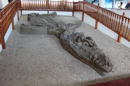 Kronosaurus boyacensis fossil.jpg
