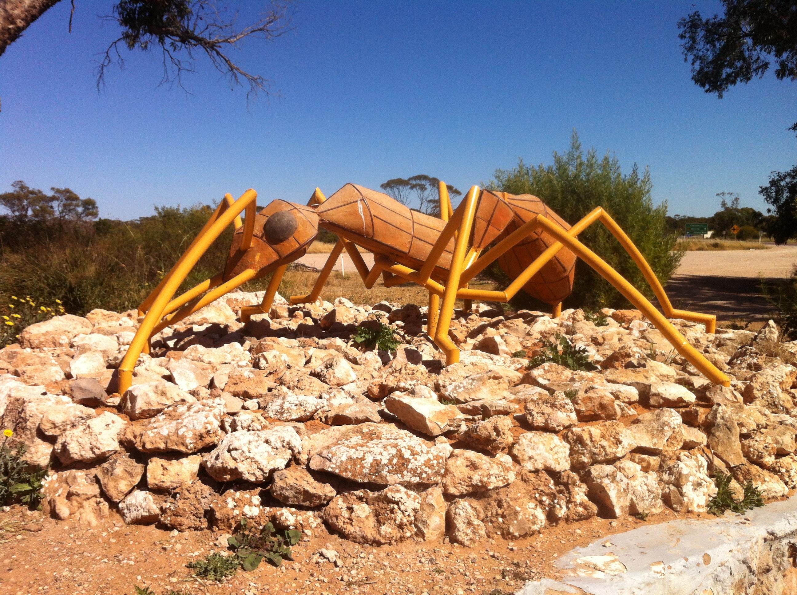 Big Ant de Poochera