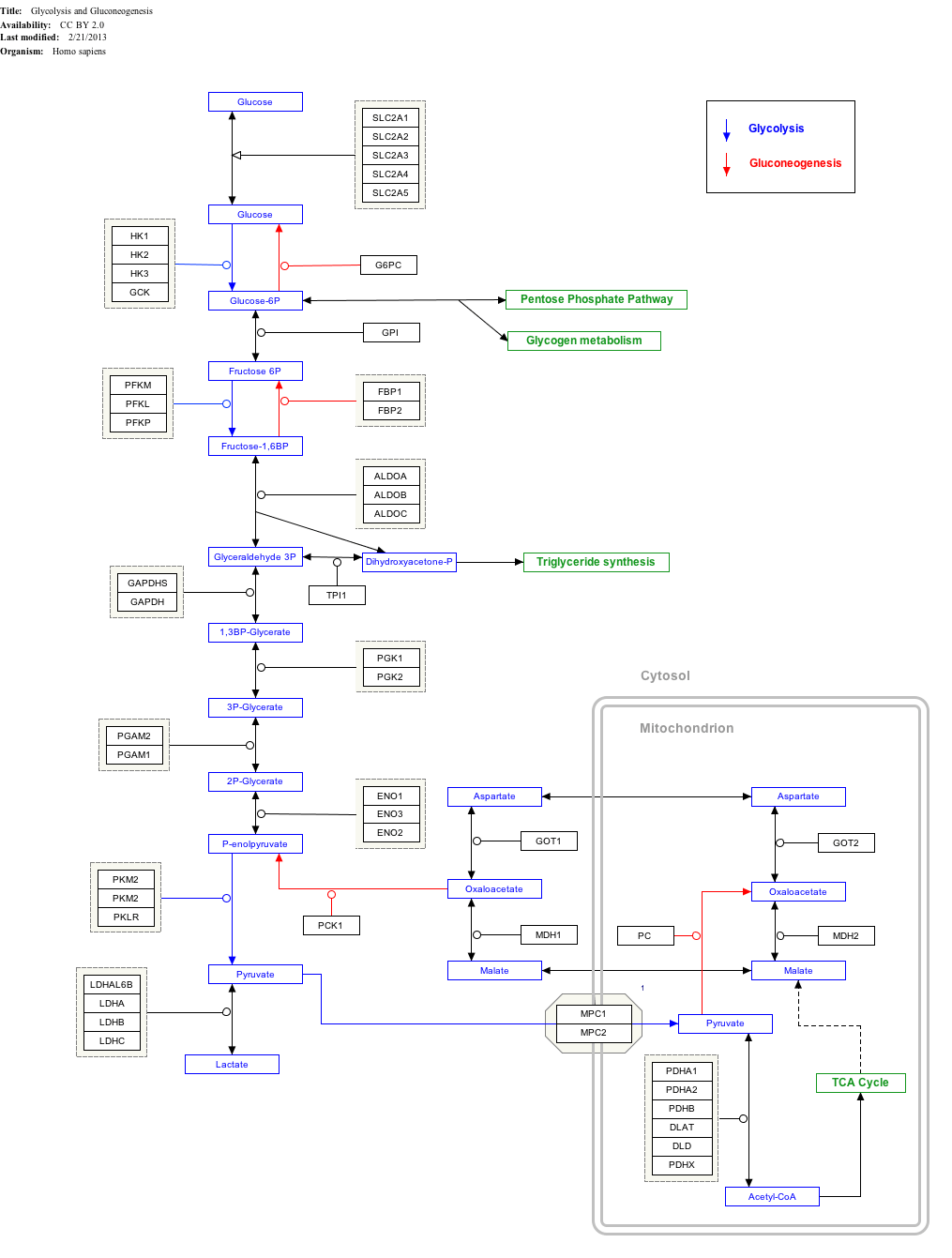 stages of glycolysis and fermentation diagram dmz network with 3 wikipedia glycolysisgluconeogenesis wp534