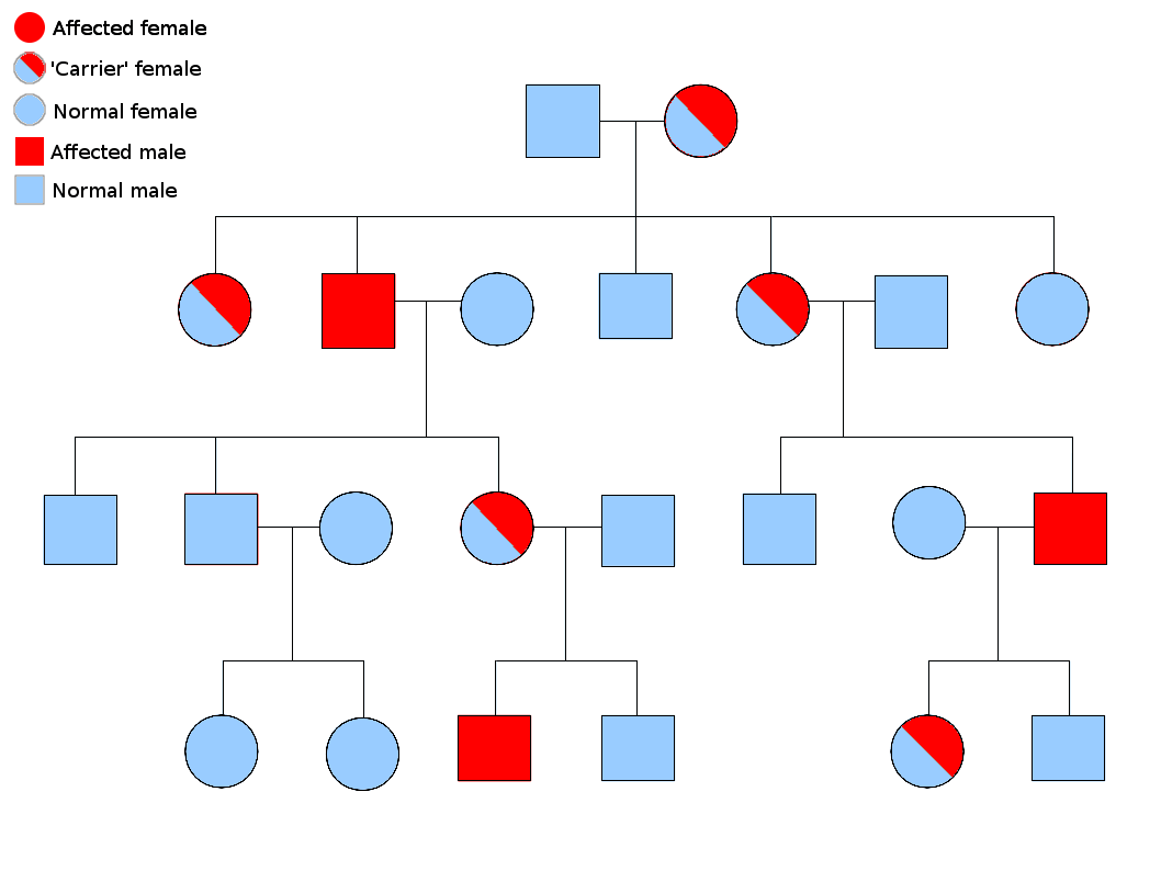 blank probability tree diagram template relay switch wiring ac choroideremia - wikipedia