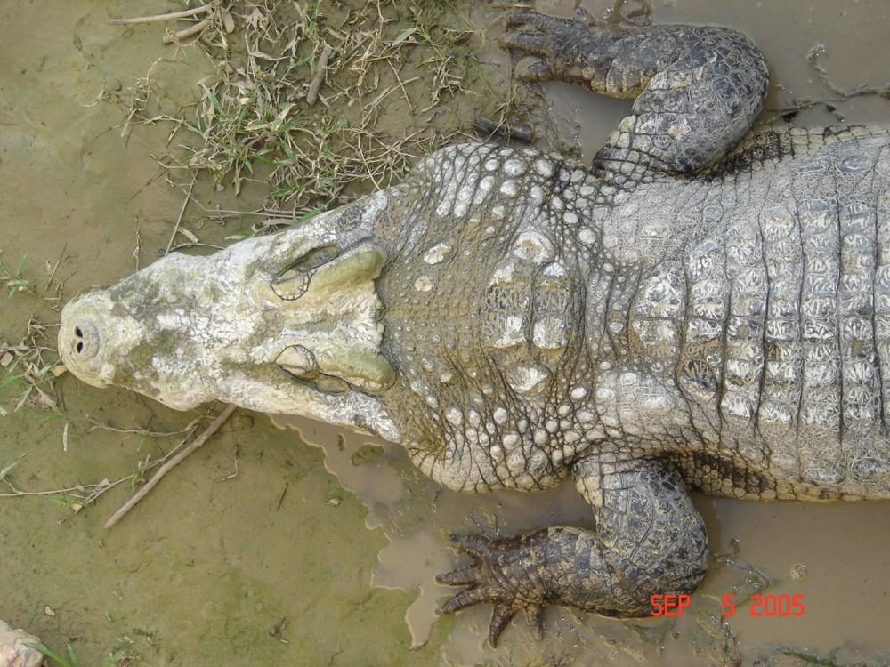 medium resolution of reptile scale