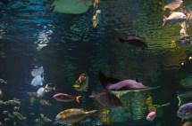 File Aquarium Silverton Lodge & Casino Las Vegas