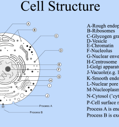 file cell structure cell diagram png wikimedia commons file cell structure cell diagram png [ 1600 x 900 Pixel ]