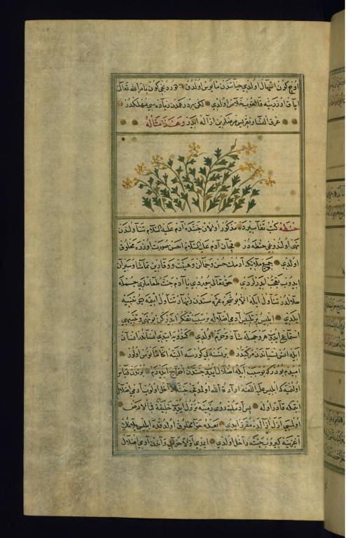 small resolution of file muhammad ibn muhammad shakir ruzmah i nathani a colocynth plant
