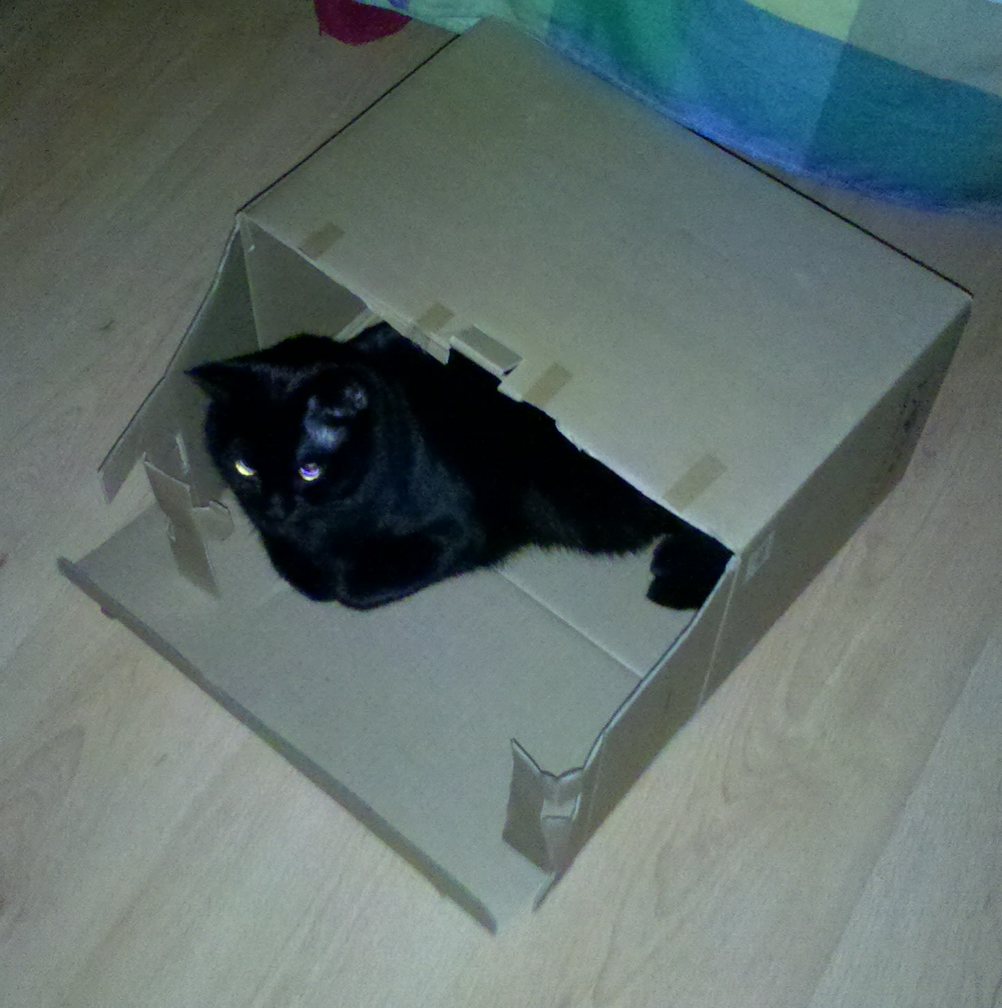 A black cat in a box