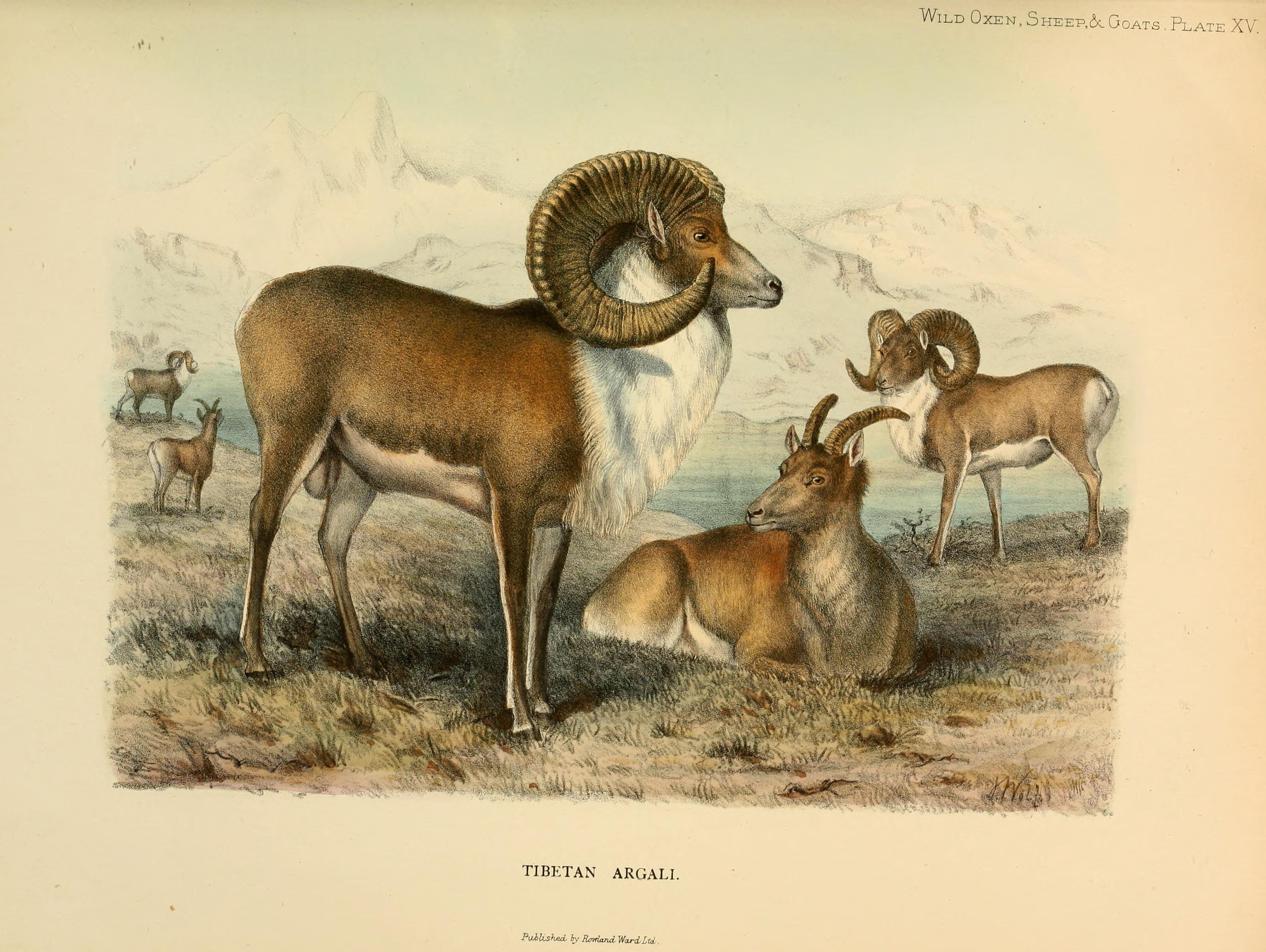Animals American Prehistoric North
