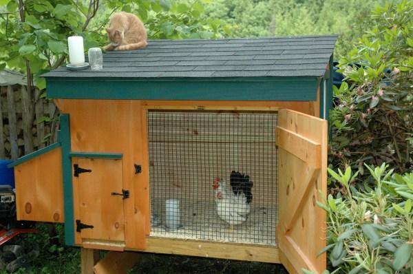 Chicken Co-op Ideas