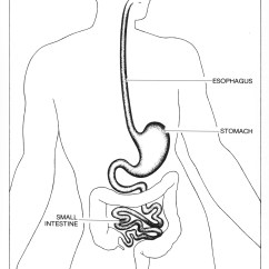 Swallowing Food Diagram Panel Wiring Of An Alternator Acid Reflux Symptoms And Treatments