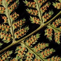 Moss Diagram Labeled Chevy 305 Firing Order Sporophyte Gearbox Elsavadorla