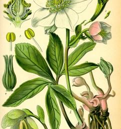 flower throat diagram [ 1497 x 2353 Pixel ]