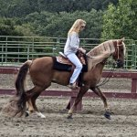 Kentucky Mountain Saddle Horse Wikipedia