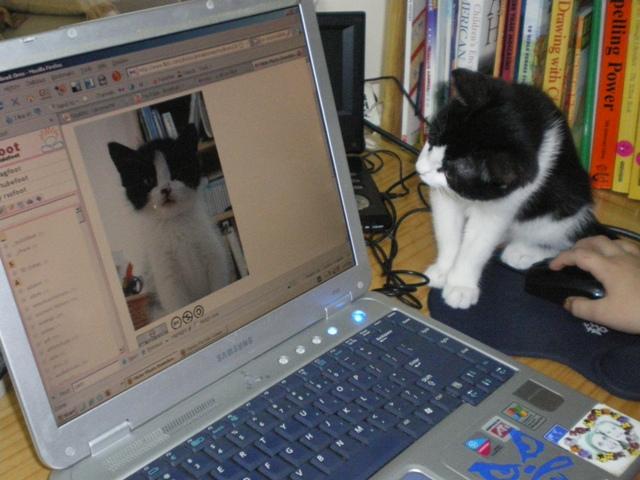 https://i0.wp.com/upload.wikimedia.org/wikipedia/commons/b/b1/Cat_stares_at_itself_on_computer_monitor.jpg