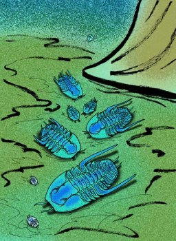 Vida marina paleozoica: Shumardia granulosa
