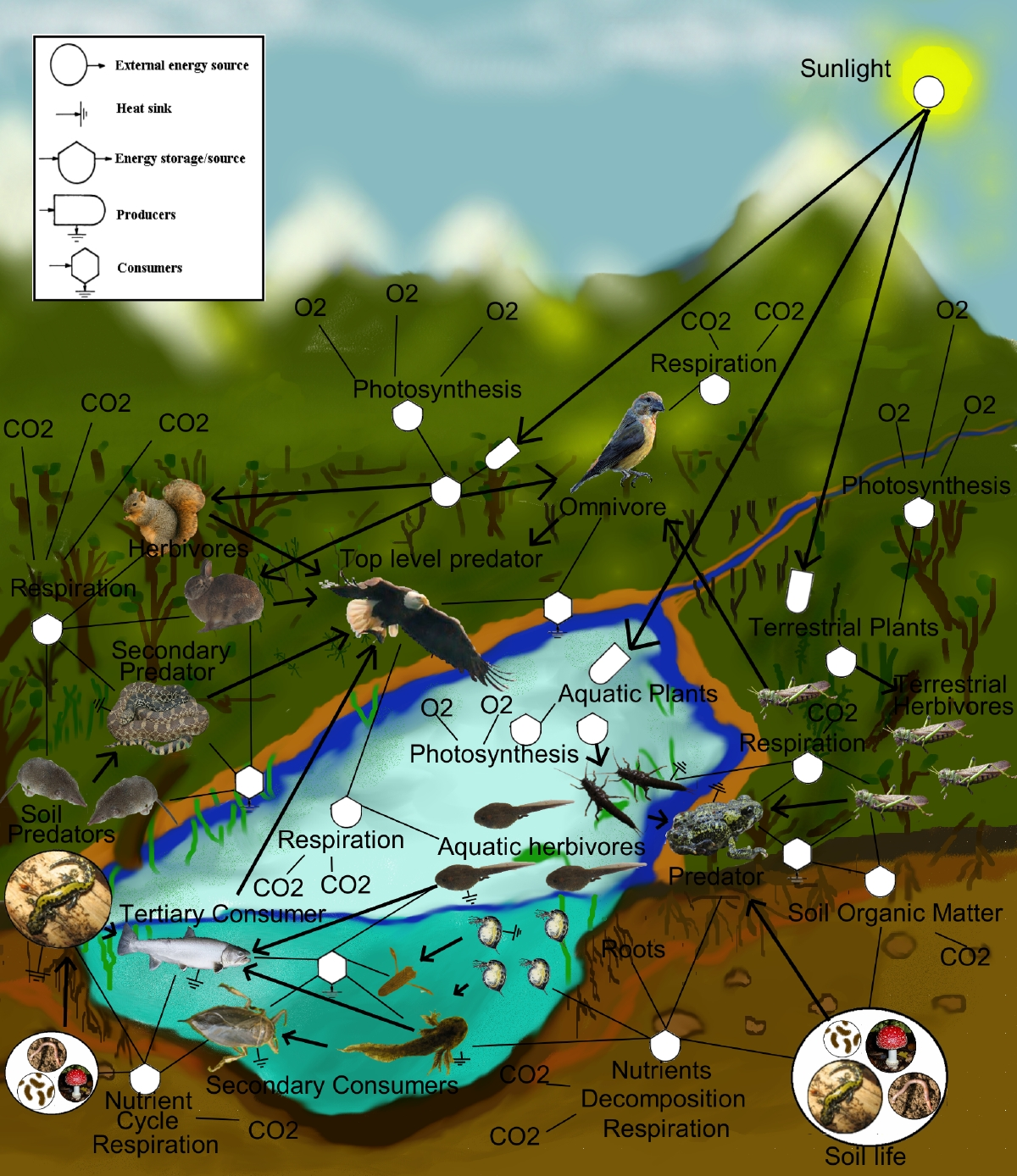 pacific ocean food web diagram ternary phase software wikipedia
