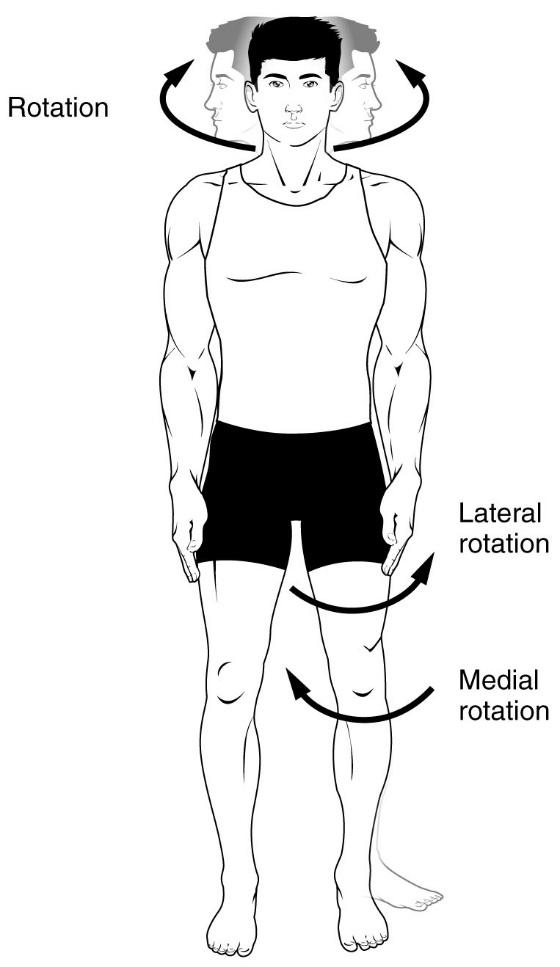 Rotation (Medizin)