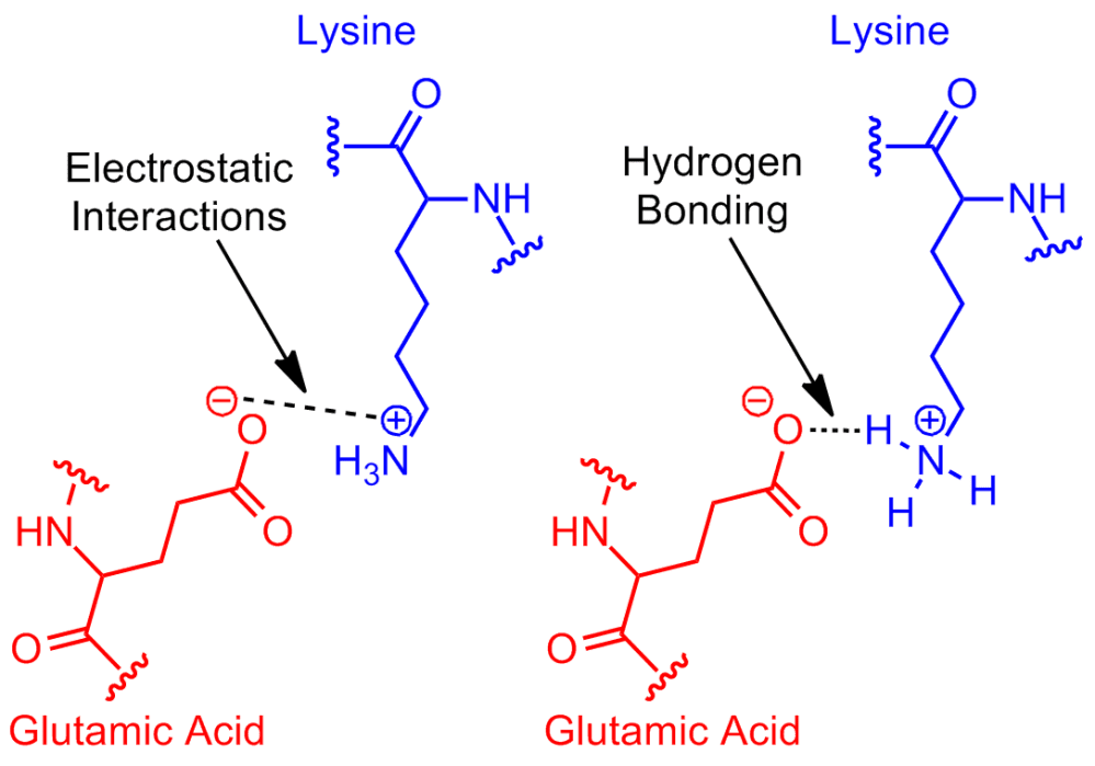 medium resolution of salt bridge protein and supramolecular