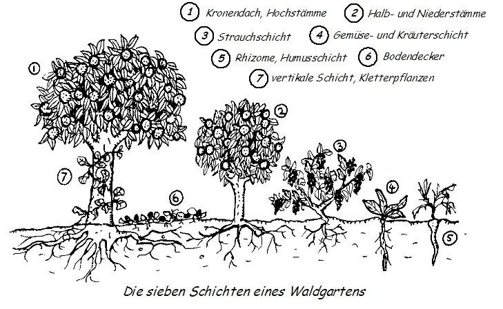Waldgärten können gesunde Bio-Lebensmittel für alle