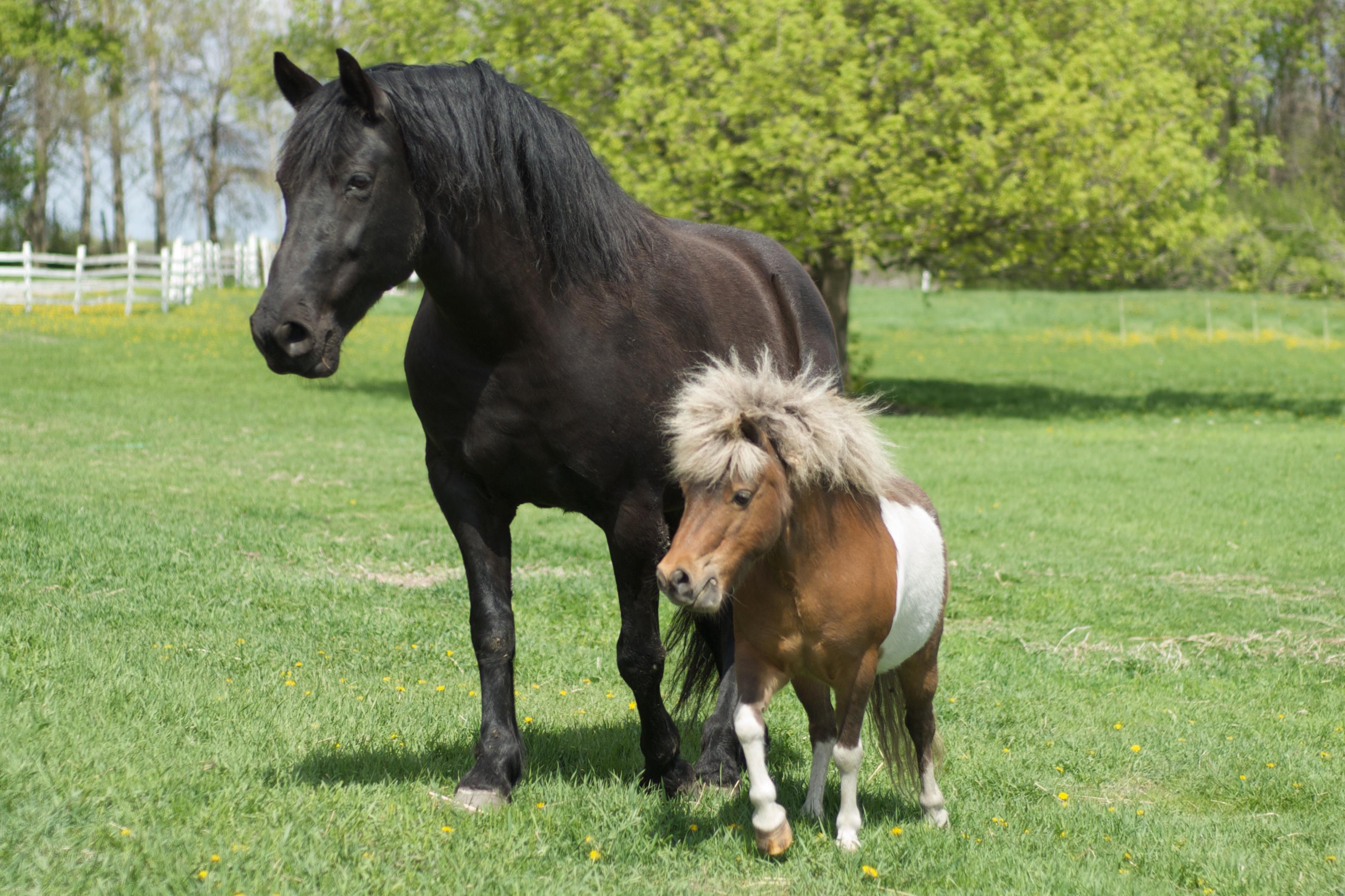 Tiedosto Big Horse And Little Horse Wikipedia