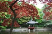 File:Changdeokgung Palace Garden Seoul (1).jpg - Wikimedia ...