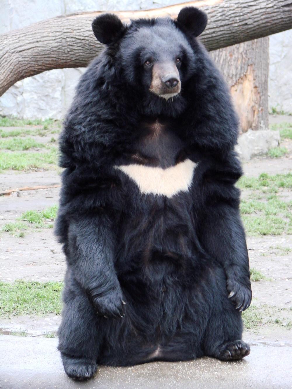 medium resolution of bear hunting diagram