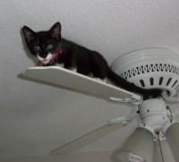 File:Ceiling cat.jpg - Wikimedia Commons