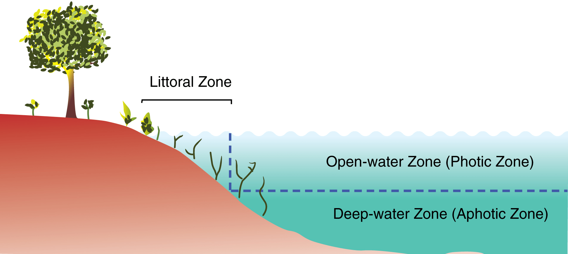 Primary Zones Of A Lake