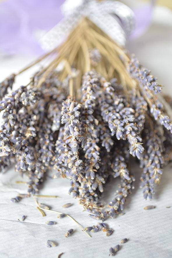 Plante aromatique  Wikipdia