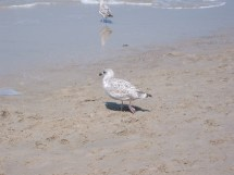 File 2002-07 Sylt - Beach Young Wikimedia