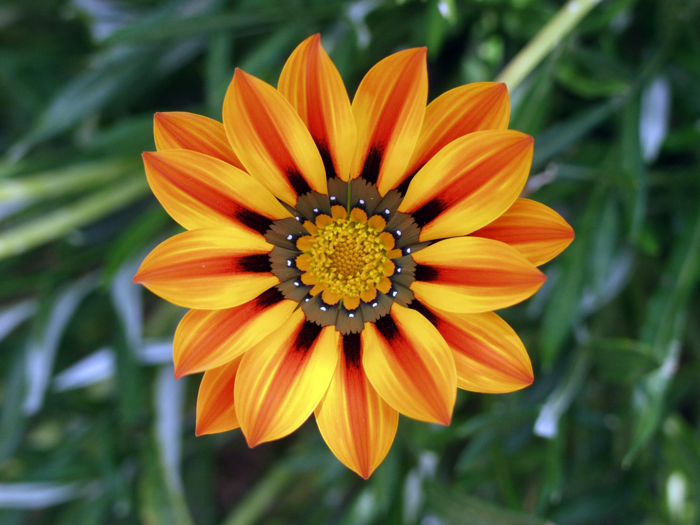 file flower jtca001 jpg