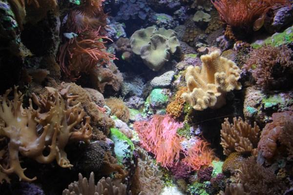 File Wild Reef Shedd Aquarium 7