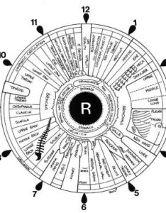 File iridology iris eye chart right mirrorg also wikimedia commons rh commonsmedia