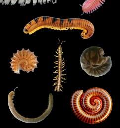 centipede diagram [ 2912 x 4392 Pixel ]