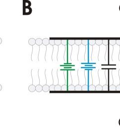 file rc membrane circuit jpg [ 1423 x 604 Pixel ]