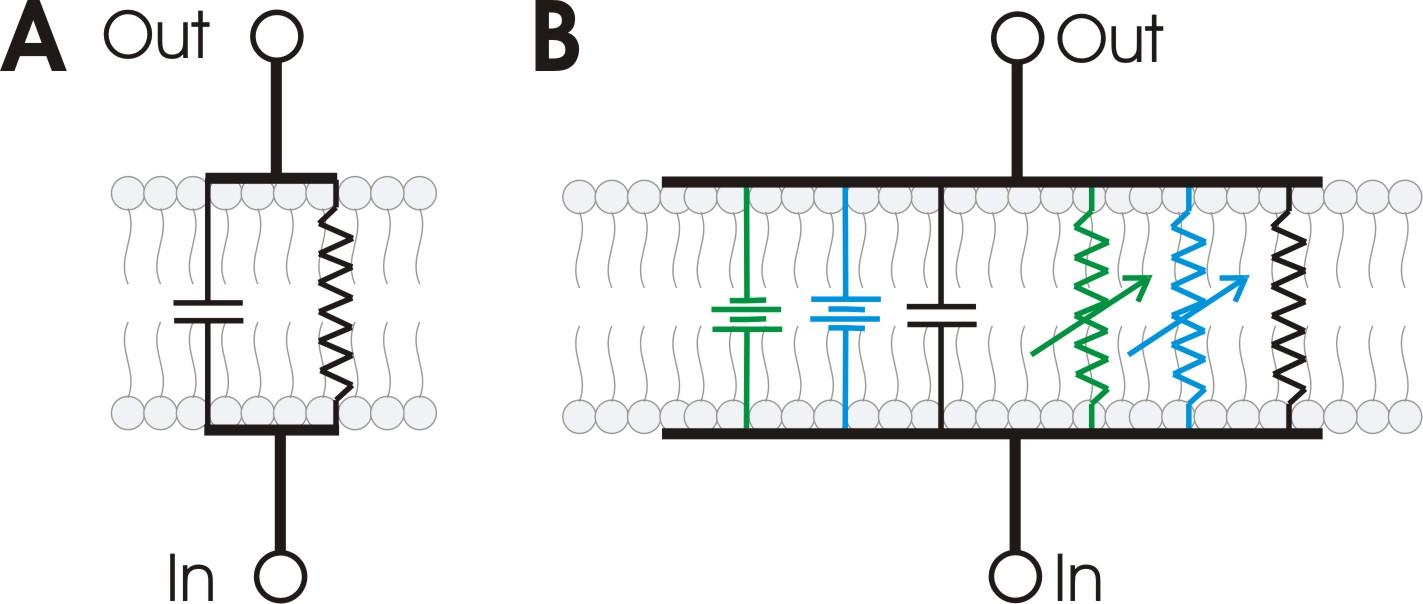 hight resolution of file rc membrane circuit jpg