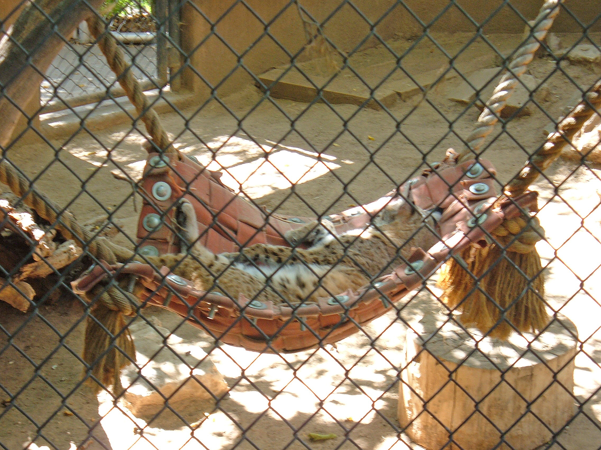 File Sleeping Bobcat In Hammock Rio Grande Zoo