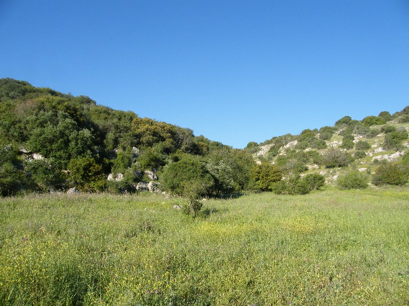 https://i0.wp.com/upload.wikimedia.org/wikipedia/commons/b/bd/Valley_of_Elah-Med_woodland.jpg