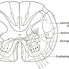 Eye Diagram Not Labeled Xbox 360 Motherboard Tectospinal Tract - Wikipedia