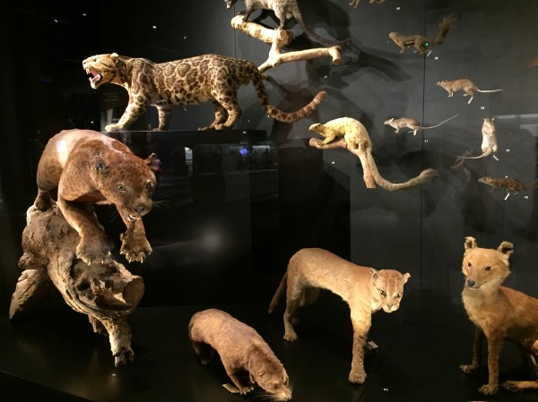 File Taxidermied Animals Lee Kong Chian Natural History