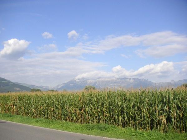 archivo field corn liechtenstein