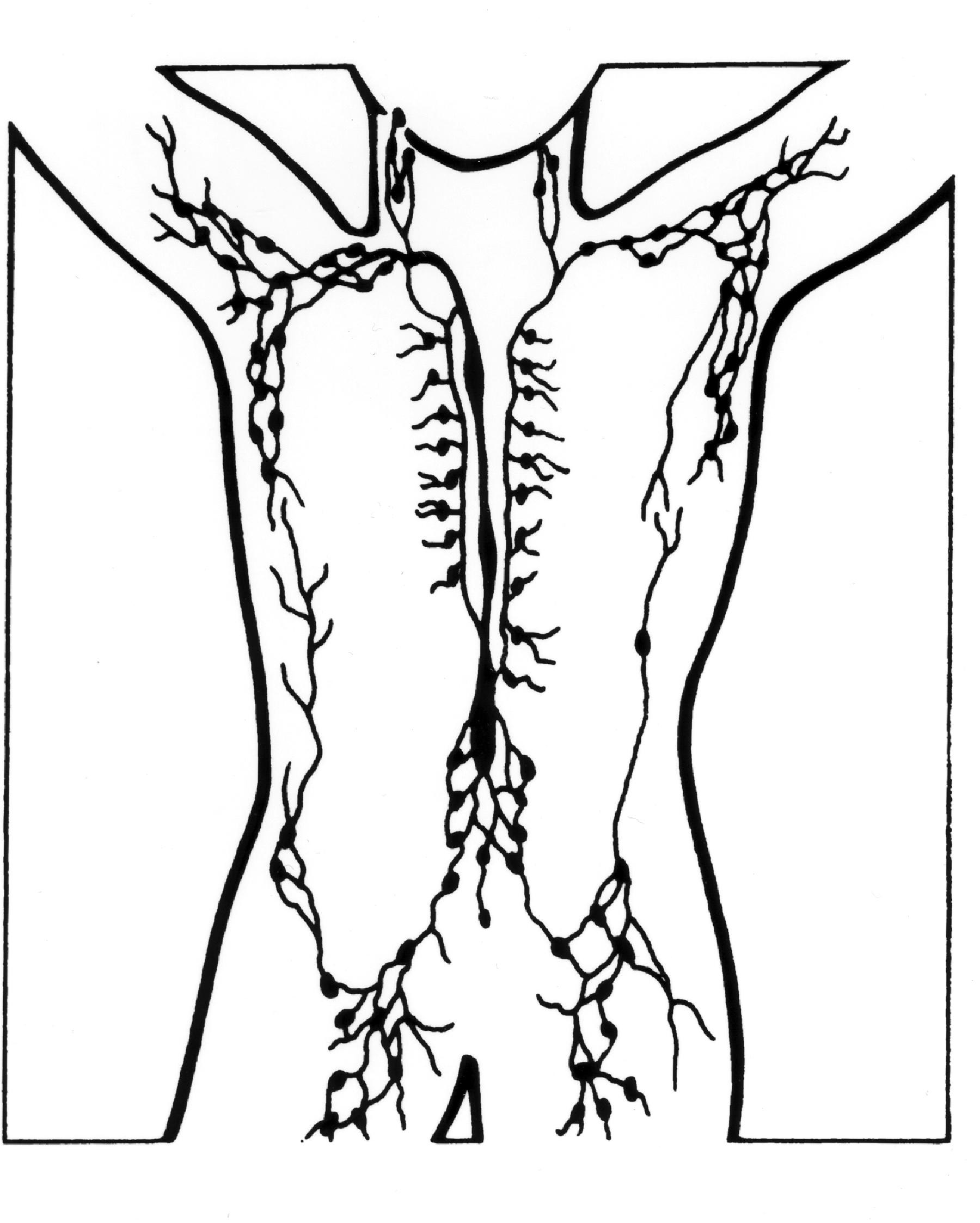 File Lymph Nodes Illustration