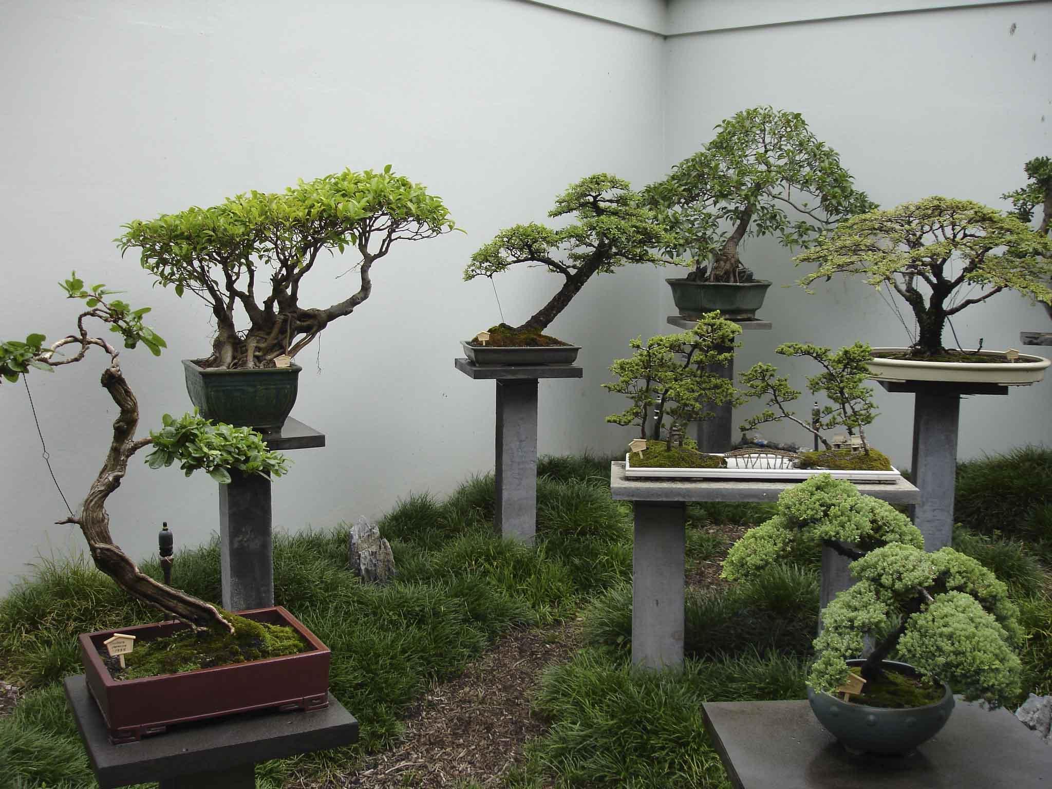 C mo cuidar el rbol de la abundancia plantas para el hogar - Como cuidar las plantas de exterior ...