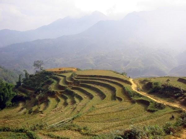 file landscape in sa pa vietnam