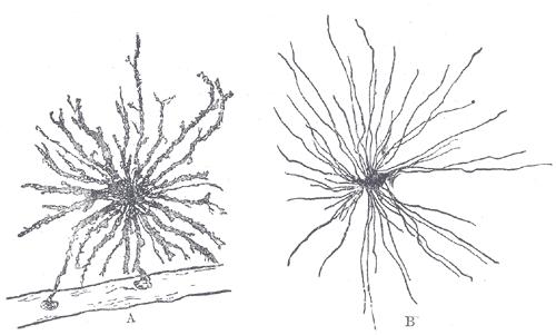 bacteria structure diagram 2008 nissan pathfinder radio wiring olfactory ensheathing glia - wikipedia