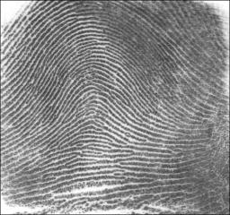 English: Picture of an arch fingerprint patter...