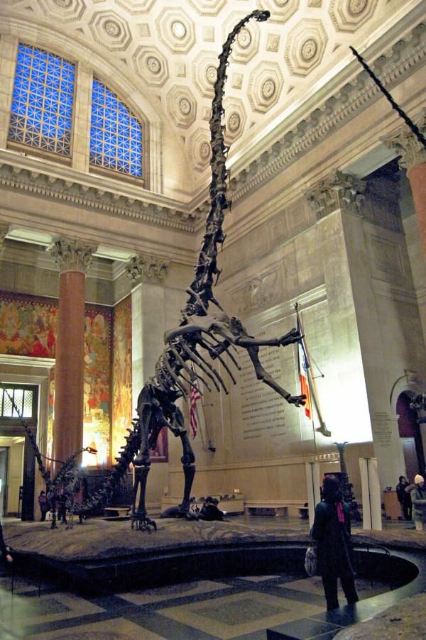 Skeleton American Museum of Natural History